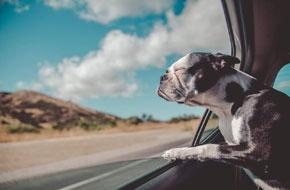 Így nyaraljunk kutyával!